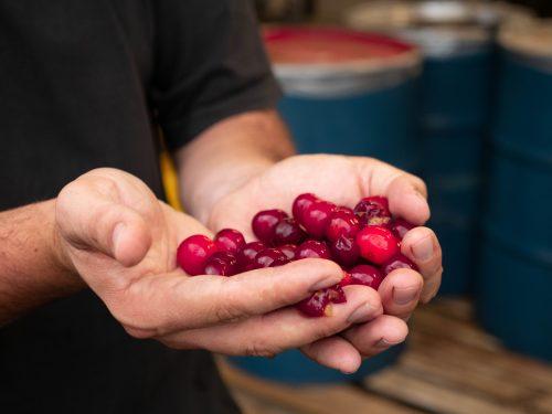 Norfolk Cherry Company